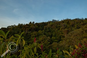 HDR Image of forested ridge in Costa Rica