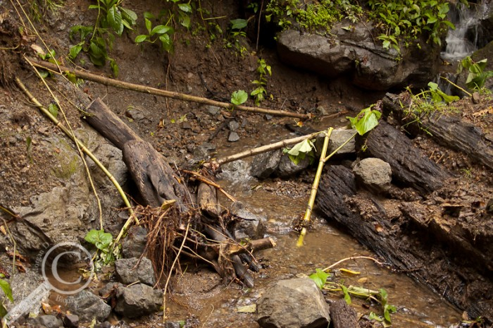 Landslide with ant colony across stream in Costa Rica
