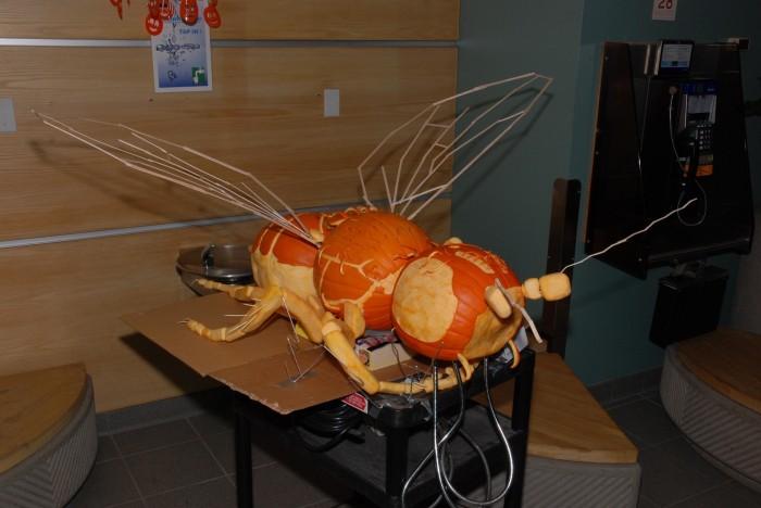 Sphaeroceridae Pumpkin Carving Jack-o-Lantern Fly Insect