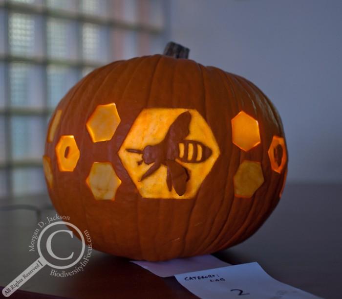 Bee Pumpkin Jack-o-Lantern