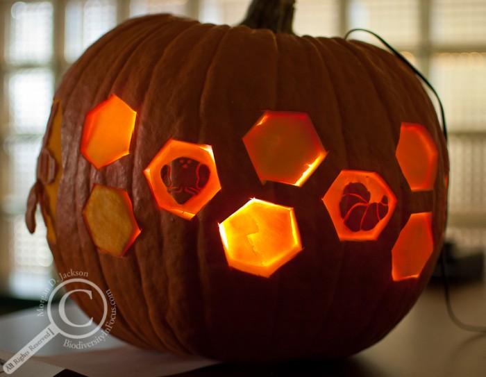 Honeybee Jack-o-Lantern Pumpkin