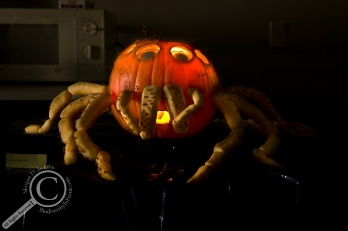 Jumping Spider Jack-o-Lantern Pumpkin Insect
