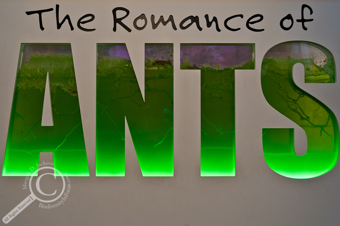 The Romance of the Ants