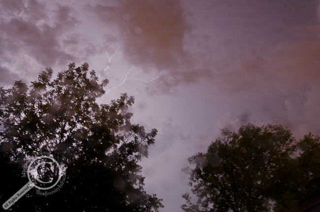 Purple Rain Thunder & Lightning over Guelph