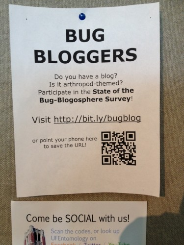 Bug Girl Flyer