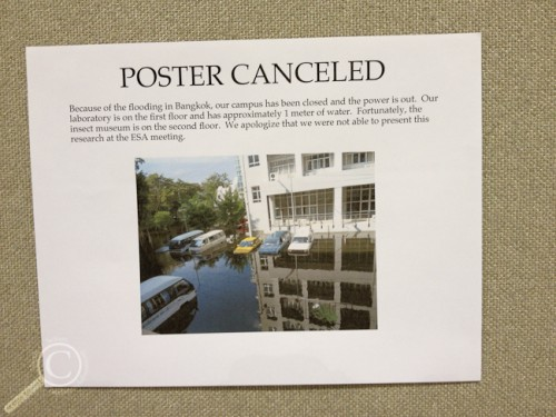 Poster Cancelled due to Thailand Flooding