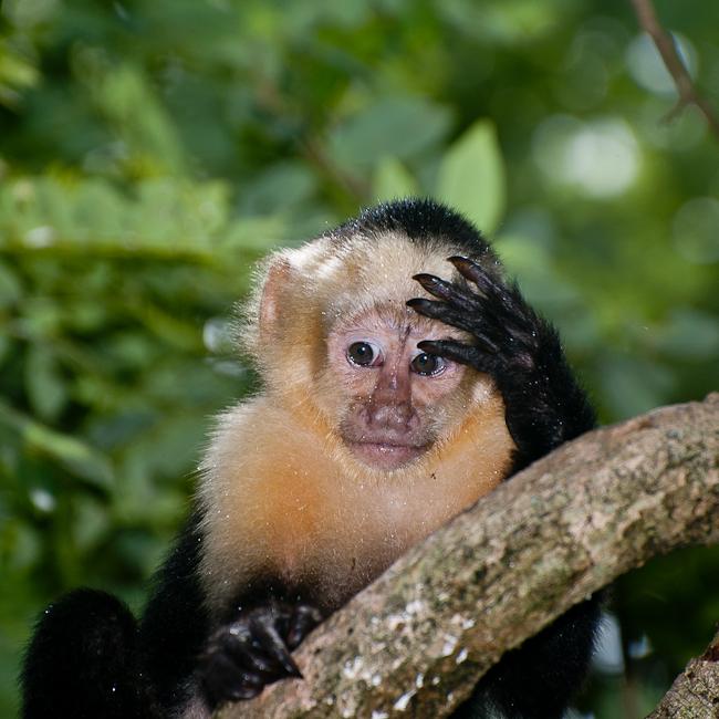 #MonkeyFacePalm