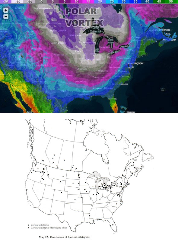 Polar Vortex vs. Goldenrod Gall Fly. Polar Vortex map courtesy of RightWeather.com, Eurosta solidaginis range map from Foote et al. 1993