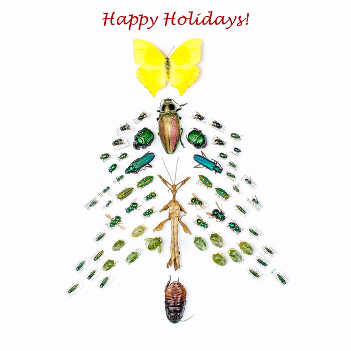 Insectmas-Tree-blog